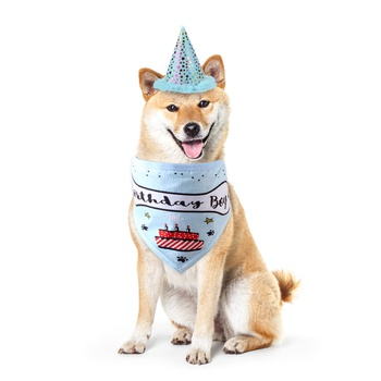 Birthday Party Hat and Bib for Pet