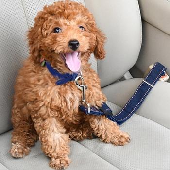 Dog Seat Belt Pet Dog Cat Car Seatbelt Safety Tether